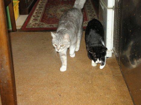 べべと盲猫のメグ